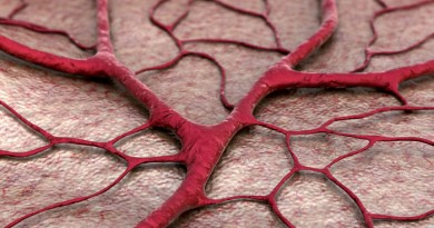 Artificial Blood Vessel Created To Help Test Medical Devices
