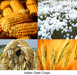 Cash Crop | 6 most popular cash crops in India ...