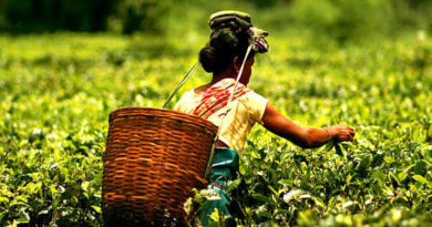 Tea producing states in India