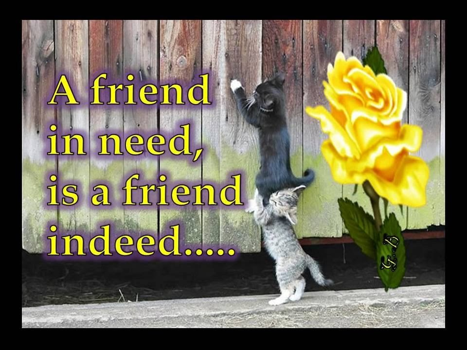 a friend in need is a friend indeed short essay on friends indeed a friend in need is a friend indeed