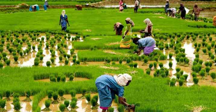 India: Issues and Priorities for Agriculture
