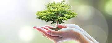 environment essay in english for students and children  simple language