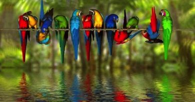 Birds Essay