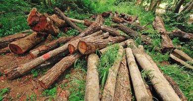 Slogan on Deforestation