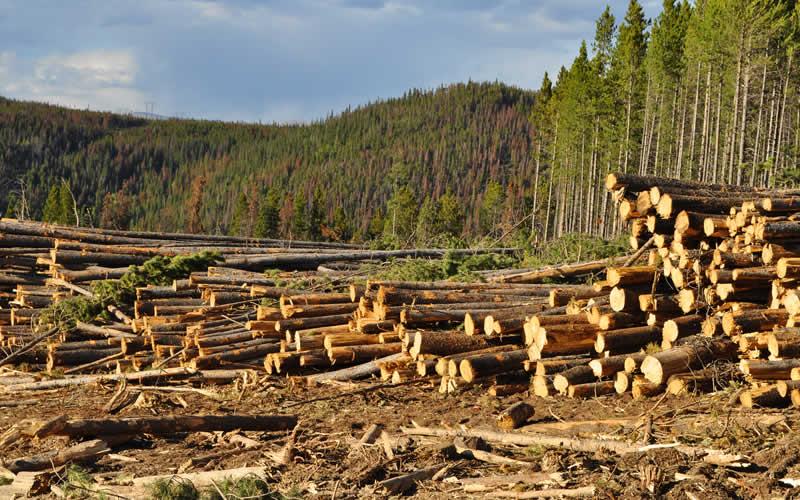 Deforestation essays