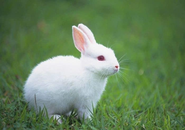 http://www.iaspaper.net/wp-content/uploads/2017/10/Rabbit-Essay.jpg