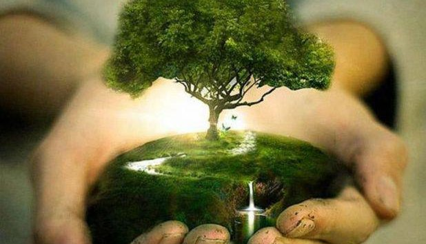 save trees essay save earth for students and kids