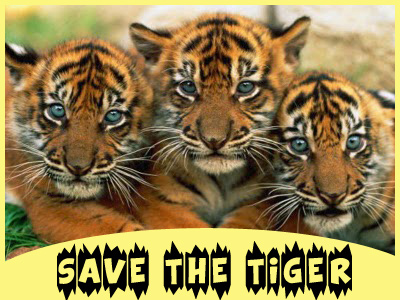 Image result for save the tigers